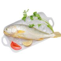 御鮮之王 東海大黃魚 新鮮黃花魚海鮮水產 大黃魚 約1000g 2條