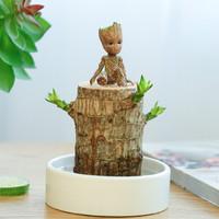 致荟树 巴西木(直径6厘米左右)+白瓷盆+格鲁特