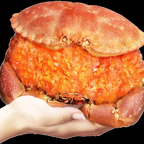 PLUS会员:首鲜道 熟冻面包蟹 2只 1.6kg-2kg