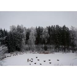 立陶宛生态学家Linas Vaitonis  冬日谈Winter's tale