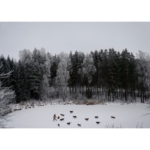 艺术品:立陶宛生态学家Linas Vaitonis  冬日谈Winter's tale