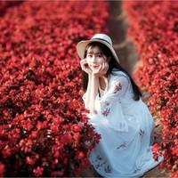 广州市 百万葵园 全家春日游完·畅玩主题花海·游乐嘉年华