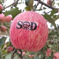 豫寶 靈寶蘋果寺河山高山紅富士蘋果 國家地理標志產品