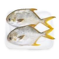 京东PLUS会员:翔泰 海南金鲳鱼 700g(2条) *3件