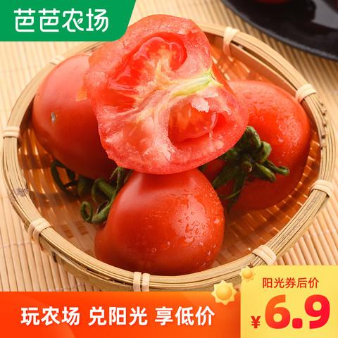 四川攀枝花露天沙瓤番茄西红柿小番茄新鲜水果生吃蔬菜9斤