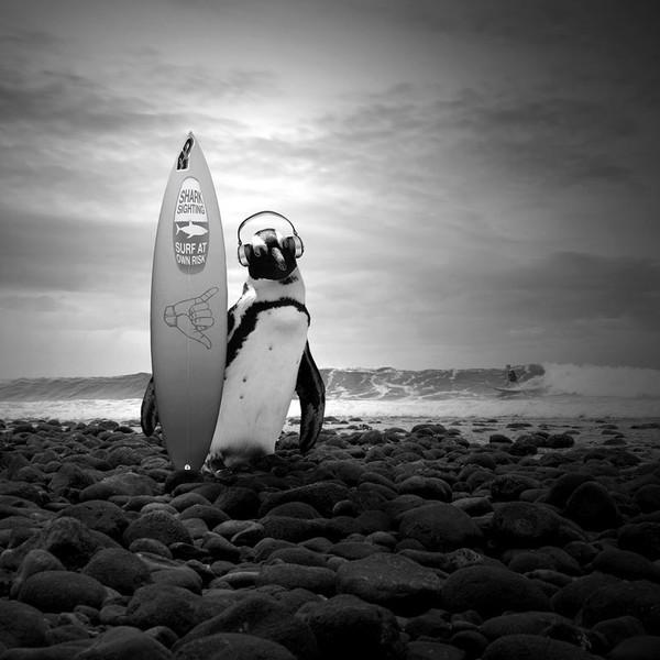 艺术品:波兰艺术家托马什·扎切纽克摄影作品《冲浪企鹅》
