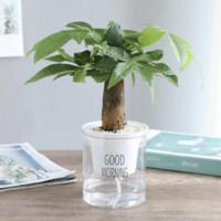 簡雪 發財樹盆栽 帶自動吸水盆