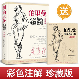 珍藏版伯里曼人体结构教学 人物速写入门基础绘画临摹书籍透视技法自学头像美术艺术手