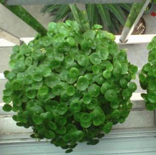 若绿 盆栽套装
