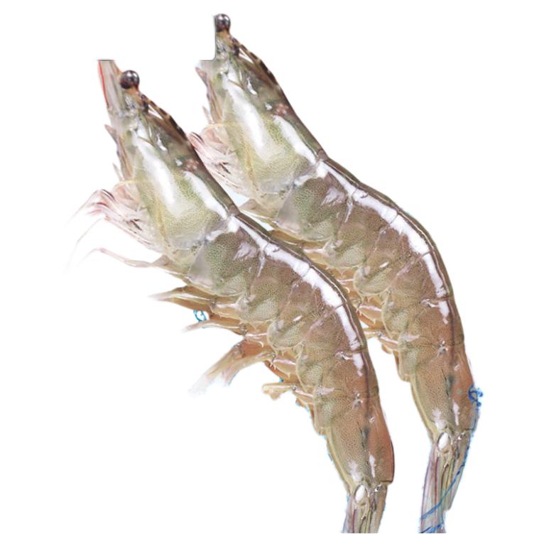 美苹 青岛大虾 1.5kg