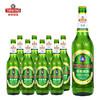 青岛啤酒经典 老青岛 11度 经典啤酒 600ml*12瓶 整箱装