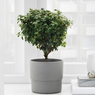IKEA 宜家 NYPON 尼邦 花盆 9cm