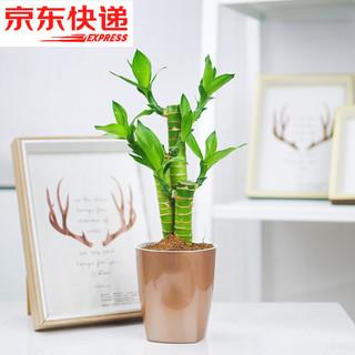 绿航绿萝  90富贵竹金属棕盆