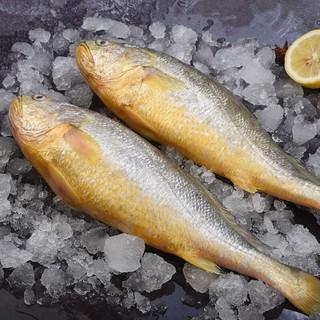 食邦人  新鲜海捕大黄鱼 净重500-600g  3条装