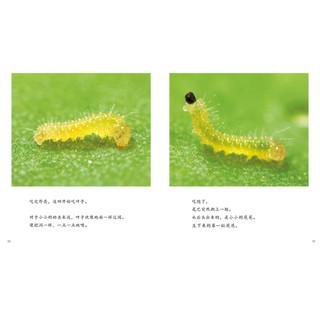 《生命的故事·第1辑:诞生了!菜粉蝶》