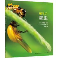 《生命的故事·第1辑:诞生了!瓢虫》