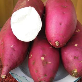 静益乐源 板栗红薯 农家地瓜 商薯白心板栗红薯 中大果2.5斤
