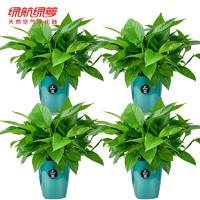 绿航绿萝 绿萝盆栽室内客厅卧室水培青叶仿金属绿4盆