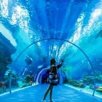 4月儿童票免费约!周末/五一不涨价!上海海昌海洋公园成人票