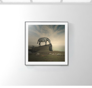 【pica photo】Tomasz Zaczeniuk 斑马 33 x 33 cm 限量50版 无酸装裱