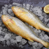 PLUS会员:食邦人   新鲜海捕大黄鱼  3条装