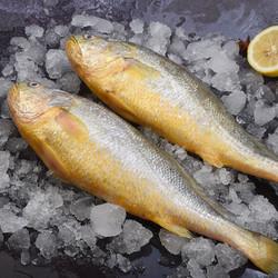食邦人   新鲜海捕大黄鱼  3条装