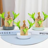 巴西木幸運木水養水培植物盆栽辦公室內桌面格魯特四季樹樁綠植芳草閣 巴西木6cm+陶瓷盆