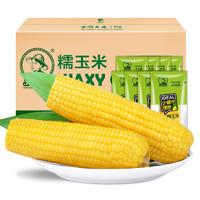 东北农嫂 黄糯玉米  200g*8支 1.6kg