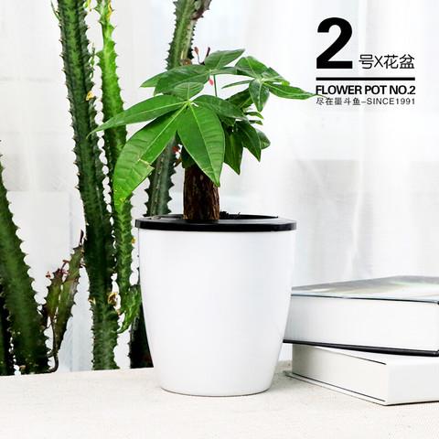 京东PLUS会员:墨斗鱼 自动吸水花盆 2号 3个装不含花