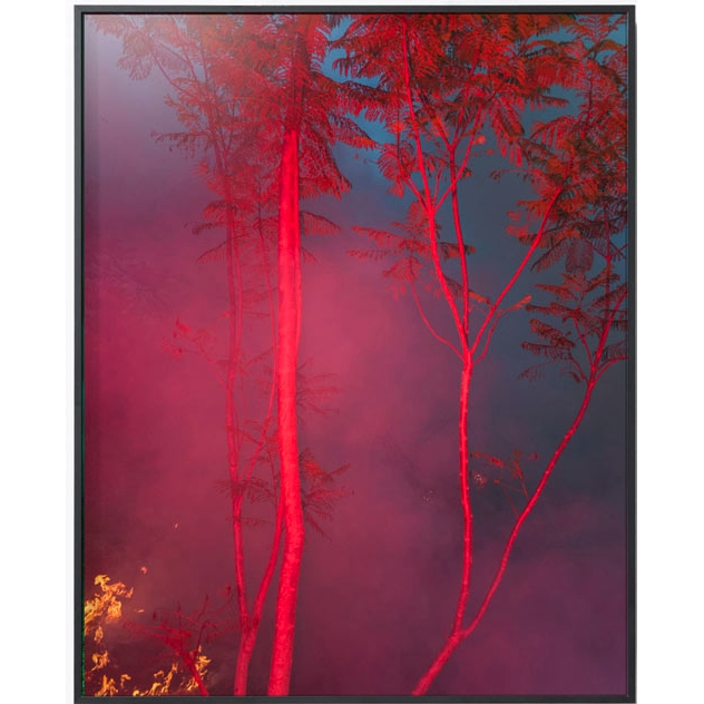 PICA photo加拿大艺术家 Benoit Paillé  林火 2号 33*30cm 无酸装裱