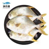 渔传播   国产深海金鲳鱼  1.5kg