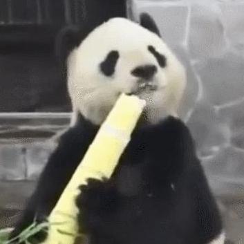 我有竹笋我就是不懂吃,我就是玩