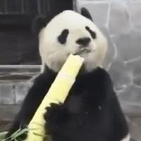 我猜你想要:我有竹笋我就是不懂吃,我就是玩