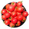 芬果时光 新鲜国产圣女果 小番茄西红柿 2.3-2.5kg 新鲜蔬菜