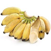 六尚 广西小米蕉  3斤