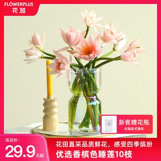 FlowerPlus 花加 香槟睡莲单品花束云南产地水养鲜切花装饰速递包邮
