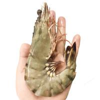 瀚通 新鲜活冻黑虎虾 8-12只 毛重600g