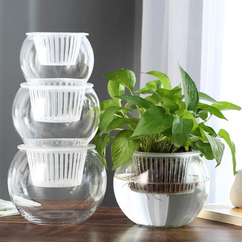 乐之沭 创意水培瓶植物透明玻璃花瓶容器绿萝花盆鱼花共养缸水养摆件器皿