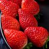 现摘草莓 新鲜水果 3斤装 无膨大 京东生鲜 产地直发 包邮