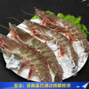 渔公码头 女王虾(大号)活冻 白虾可扒虾仁 毛重600g净400g 13-16只/盒