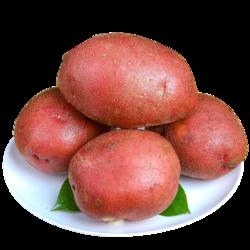 可橙可甜  果忆生鲜 云南小土豆   5斤