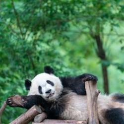 熊猫基地+都江堰一日游,166元起,三星堆博物馆讲解一日游,269元起,九寨沟3天2晚,628元起,