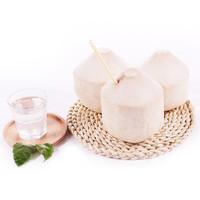 88VIP:泰国椰青 椰子大果 850g*4个
