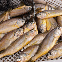 PLUS会员:果鲜岛  野生小黄花鱼  5斤