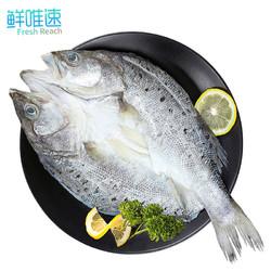 鲜唯速 珠海特产 三去白蕉海鲈鱼 1kg