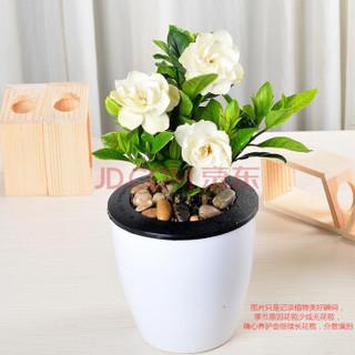 艺藤 桌面懒人花盆盆栽 栀子花