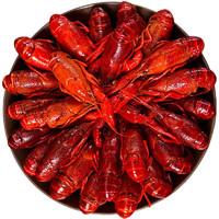 京东PLUS会员 : 谷源道 小龙虾 加热即食 海鲜水产 麻辣1.8kg 4-6钱/50-35只 净虾2斤