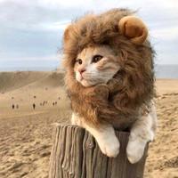 咪贝萌 猫咪个性狮子头套
