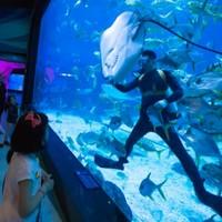 烟台海昌鲸鲨海洋公园双人年卡