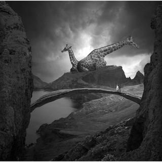 PICA Photo 拾相记 Tomasz Zaczeniuk 作品《长颈鹿之梦》33 x 33 cm 无酸装裱 50版